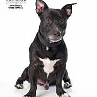 Adopt A Pet :: Apollo - Tustin, CA