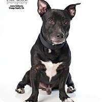 Adopt A Pet :: Apollo - Tustin, CA