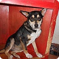 Adopt A Pet :: Mandy - San Diego, CA