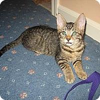 Adopt A Pet :: BOGEY - Hamilton, NJ