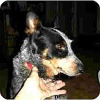 Adopt A Pet :: Kelsey - Kingwood, TX