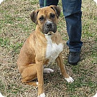 Adopt A Pet :: LAYLA - Glastonbury, CT