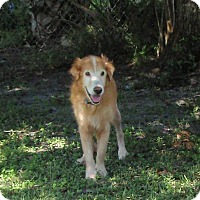 Adopt A Pet :: Harry - Murdock, FL