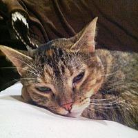 Adopt A Pet :: Street - Cerritos, CA