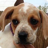 Adopt A Pet :: Estill - Pleasant Plain, OH