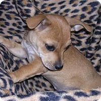Adopt A Pet :: Rosie Boy 3 - Yucaipa, CA