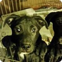 Adopt A Pet :: IVY -- Dixie's Chicks - Pena Blanca, NM