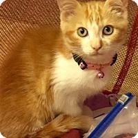 Adopt A Pet :: Logan (need barn) - Muskegon, MI