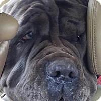 Adopt A Pet :: GRETCHEN - Oswego, IL