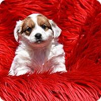 Adopt A Pet :: Oriana - Groton, MA
