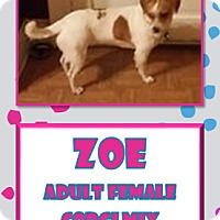 Adopt A Pet :: Zoe - Hanover, PA