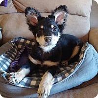 Adopt A Pet :: Kade - Flemington, NJ