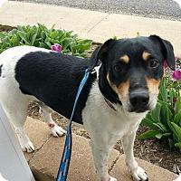 Adopt A Pet :: Remington - Lisbon, OH