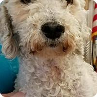 Adopt A Pet :: Ginny - Thousand Oaks, CA