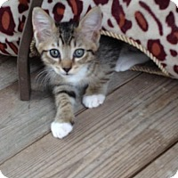 Adopt A Pet :: Davey - Crestview, FL