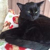 Adopt A Pet :: Won Ton - Quilcene, WA