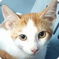 Adopt A Pet :: Earl - McHenry, IL