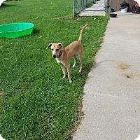 Adopt A Pet :: Captain Kirk - Moberly, MO