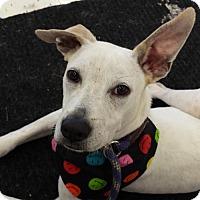 Adopt A Pet :: Sheldon - Coldwater, MI