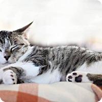 Adopt A Pet :: Mariah Hairy - Florence, KY