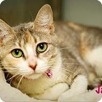 Adopt A Pet :: Jade - Baton Rouge, LA