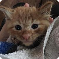 Adopt A Pet :: Pumpkin or Jack - Jerseyville, IL