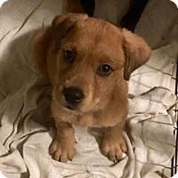 Adopt A Pet :: Onesie - Houston, TX