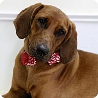 Adopt A Pet :: Waylon - Picayune, MS