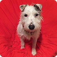 Adopt A Pet :: Freddie - Sherman, CT