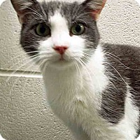 Adopt A Pet :: ADOPTED!!!   Greyson - Hinsdale, IL