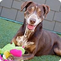 Adopt A Pet :: Uno - Coronado, CA