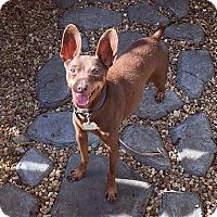 Adopt A Pet :: Buddy - Davie, FL