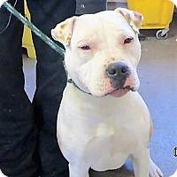 Adopt A Pet :: Mamie - Monte Vista, CO