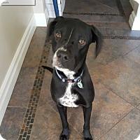 Adopt A Pet :: Peppa - Adoption Pending - Mississauga, ON