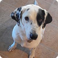 Adopt A Pet :: Angel - Aubrey, TX