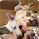 Adopt A Pet :: Trev