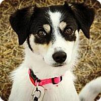 Adopt A Pet :: Madeline - Cheyenne, WY