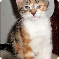 Adopt A Pet :: Carmelita - Colmar, PA