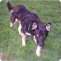 Adopt A Pet :: Maximus - Belleville, MI