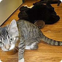 Adopt A Pet :: Whitley - Medina, OH