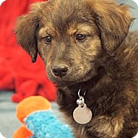 Adopt A Pet :: Kristoff - Knoxville, TN
