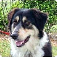 Adopt A Pet :: Rin - Orlando, FL