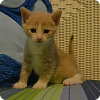 Adopt A Pet :: Nugget - Oyster Bay, NY