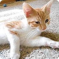Adopt A Pet :: Scamper - Richland, MI