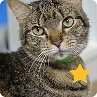 Adopt A Pet :: Elise 7328 - Atlanta, GA