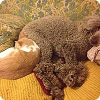 Adopt A Pet :: Frederick - Santa Rosa, CA