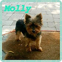 Adopt A Pet :: MOLLY - Mississauga, ON