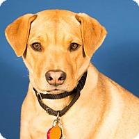 Adopt A Pet :: Adele - Berkeley Heights, NJ