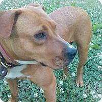 Adopt A Pet :: Maggie - Lebanon, CT