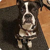 Adopt A Pet :: Lucy 3 - Woodinville, WA
